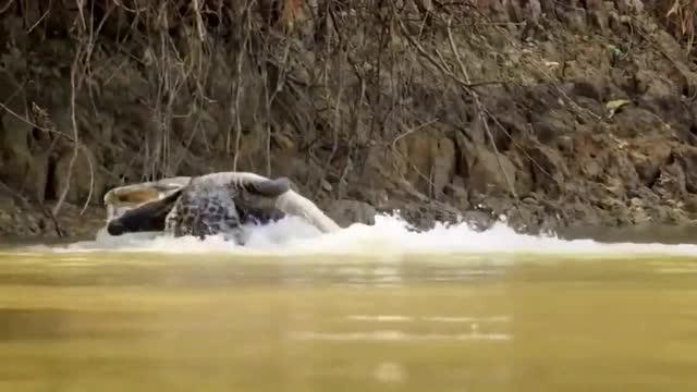水陆两栖动物,只要盯上的猎物一抓一个准