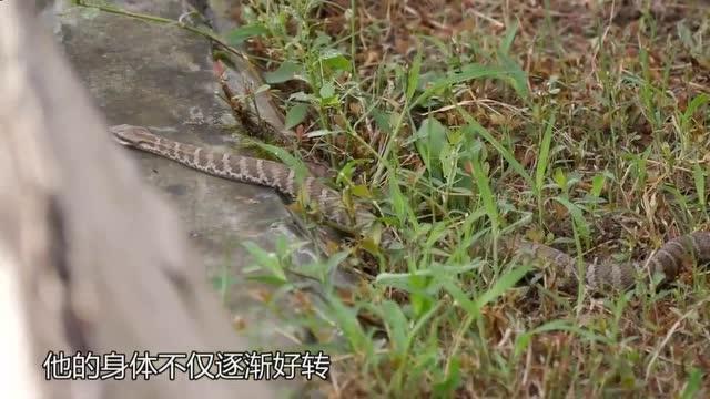 探秘中国第一蛇村,全村养了三百多万条蛇,每平方米就有上百条蛇