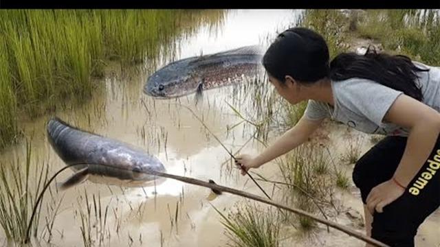 农村美女设下陷阱,抓到好多大鱼