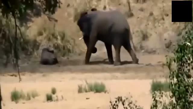 壁纸 大象 动物 640_360