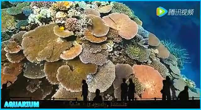 海底的动物翩翩起舞 美呆了!