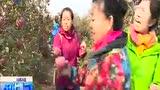 辽中县城郊镇苹果采摘——沈阳新闻