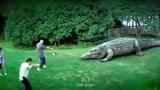 实拍巨型蟒蛇猎杀大鳄鱼,动物界最精彩刺激的争斗大场面