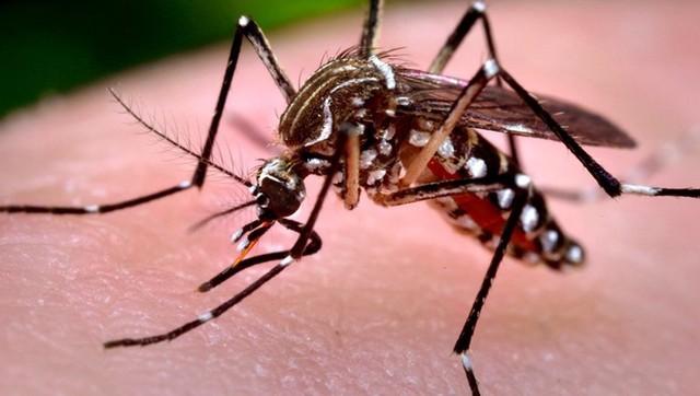 光学显微镜下观察蚊子是怎么吸血的