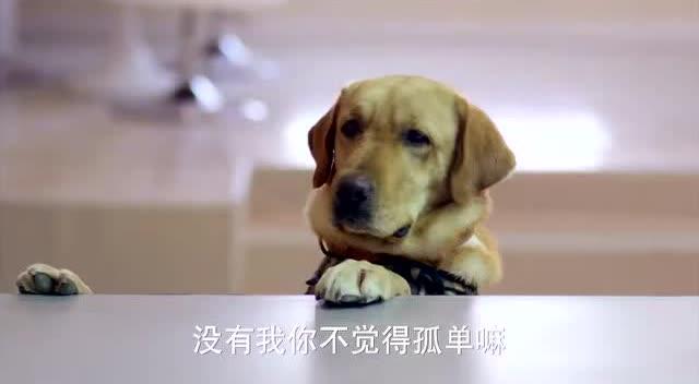 狗狗的朋友去世了,狗狗趴在骨灰盒上哭泣,好感人!