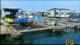 走遍中国:海南——鱼也生猛
