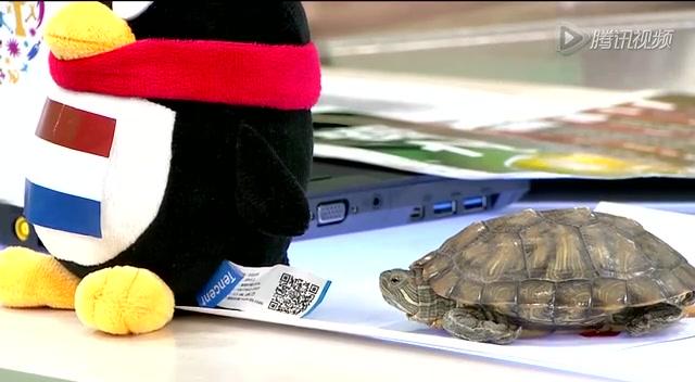 第21期:神龟心系荷兰 桂晶晶情迷阿根廷截图