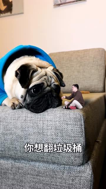 男子一夜之间突然变小,昔日宠物狗竟对他做出这种事……