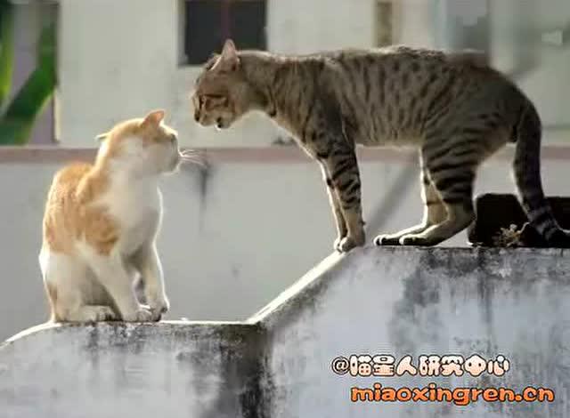 疯狂动物城3 - 腾讯视频