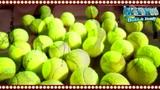 网球做成胸衣!美女球迷大尺度网球比基尼亮相