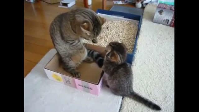正方形纸箱做动物