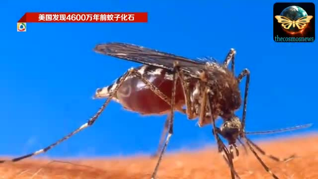 美国发现4600万年前蚊子化石 胃部存血液截图