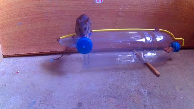 简易老鼠陷阱制作图解