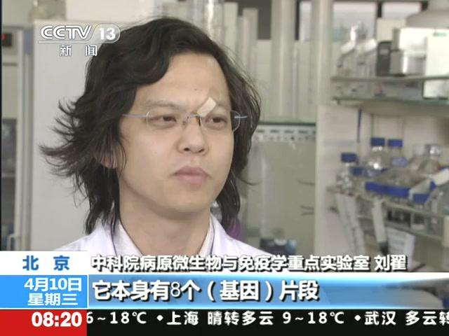 中科院专家 H7N9病毒中韩混血说法不实截图