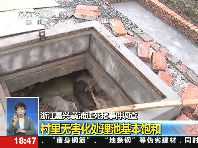 记者暗访嘉兴:死猪处理运费高 养殖户乱扔图省事截图