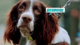 张馨予和艾勒薇斯 一段人与狗的故事