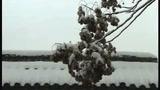 新洛神片花