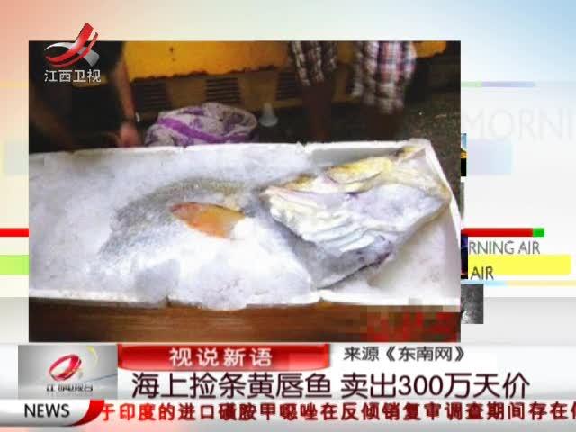 相关视频:穷汉海上捡条黄唇鱼 卖出300万天价截图