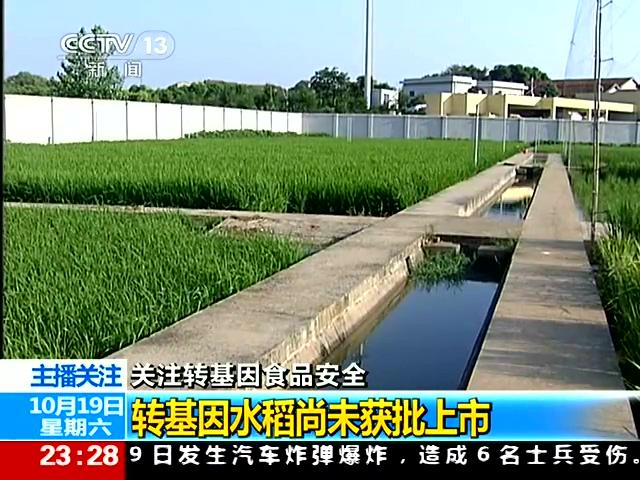 农业部:转基因水稻尚未获批上市截图