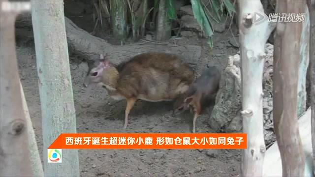 我们诞生在中国动物海报