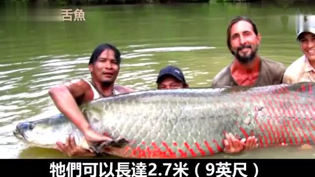 河最可怕的10种动物 巨鳄森蚺还有咬睾丸的食人鱼