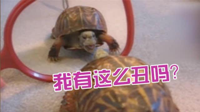 乌龟萌宠图片大全可爱