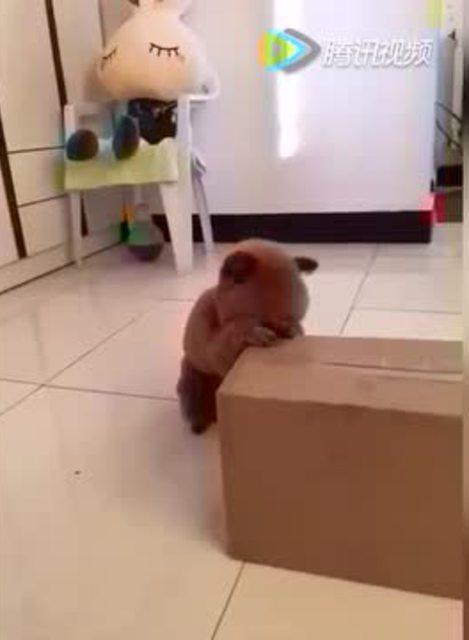 好笑!小狗狗作揖祷告才能吃到东西