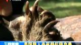 美国猎人杀死疑似吸血兽的动物