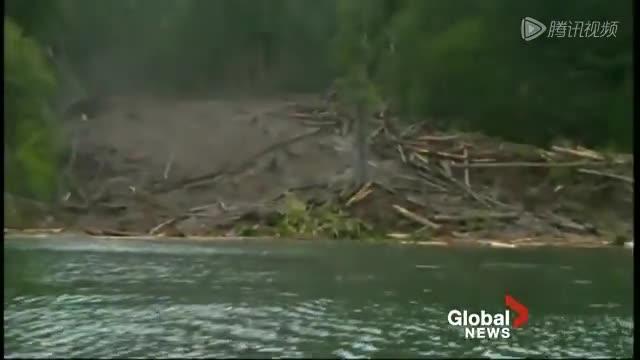 实拍泥石流推倒一片大树惊险瞬间