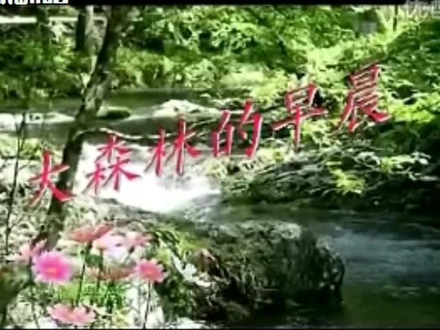 大森林的早晨-酷歌翻唱