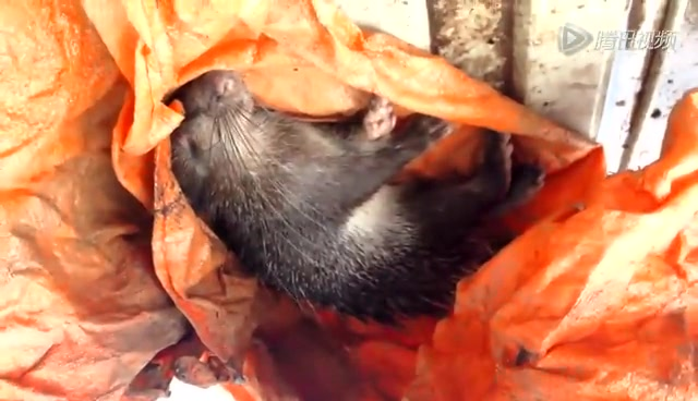 云南边境现盗卖食用野生动物集市 猕猴被宰杀兜售截图