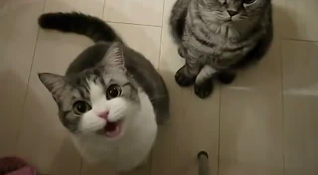 主人用雪糕诱惑猫咪,喵星人已经馋的不行了