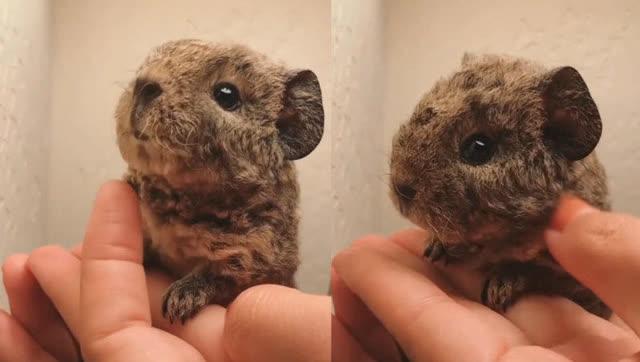 巴掌大小的动物幼崽 长大了也可爱! - 腾讯视频