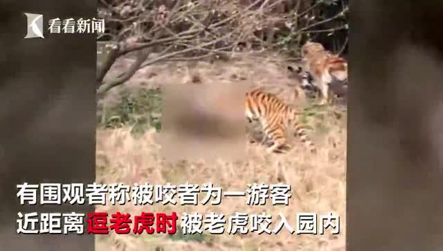 宁波雅戈尔动物园发生老虎咬人事件 现场视频曝光