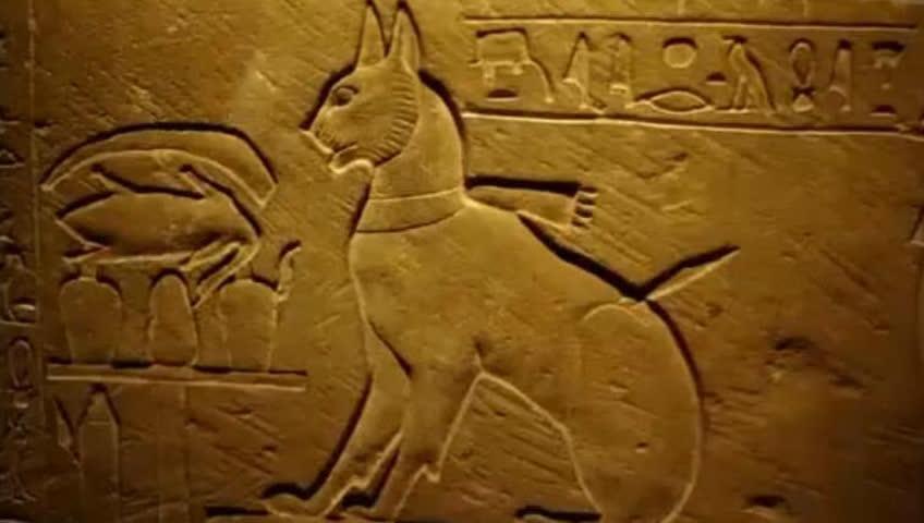古埃及金字塔里发现了一只猫?一起去看看