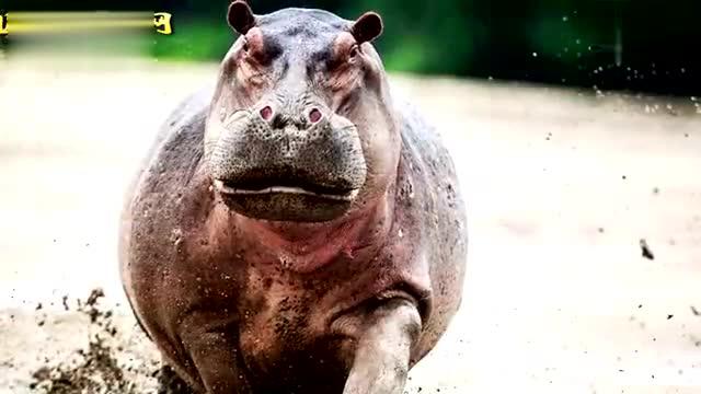 十大最具攻击性的野生动物