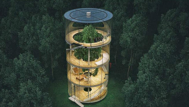 围绕一棵树建造的玻璃豪宅