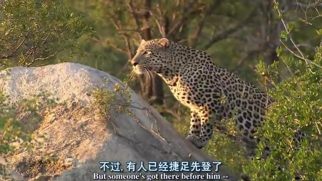 非洲野生动物的生存之路