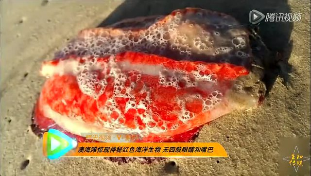 澳海滩惊现神秘红色海洋生物 无四肢眼睛嘴巴图片