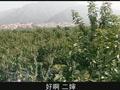 王海涛今年41第4集