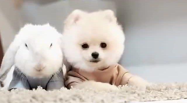 狗狗muji和乖兔兔,还以为是公仔原来会动