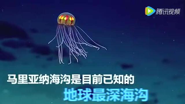 实拍科学家深海发现发光水母 如外星生物
