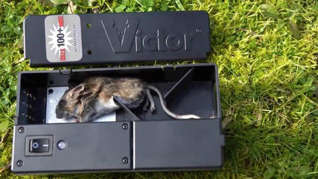 超强的电子捕鼠器,放入电池和食物,老鼠瞬间杯具