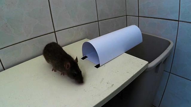 一个捉老鼠成功率并不高的纸质捕鼠器