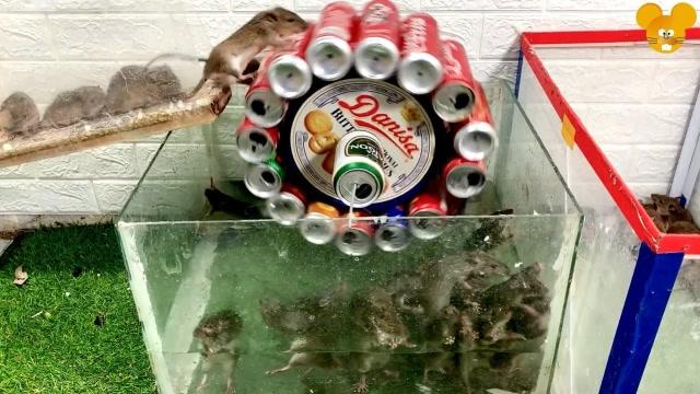 建造一个让老鼠瓦解的易拉罐捕鼠器,老鼠抓到不少!