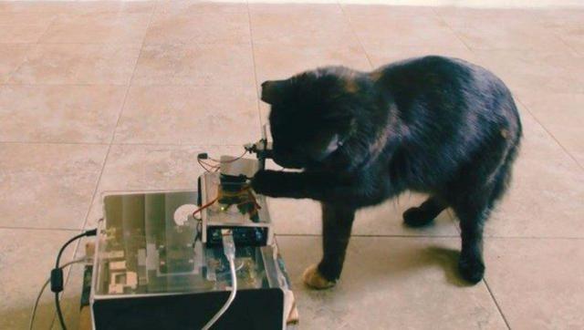 技术牛人叫你如何制作逗猫神器