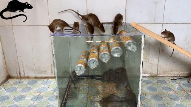 用10個易拉罐制作令老鼠絕望的捕鼠神器