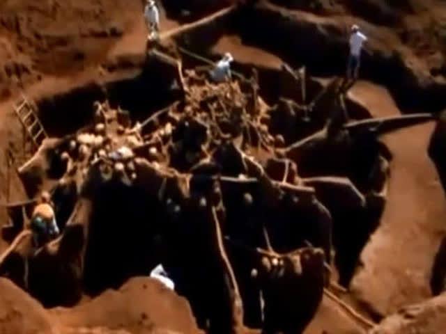 向蚂蚁穴中注入10吨水泥会怎样?