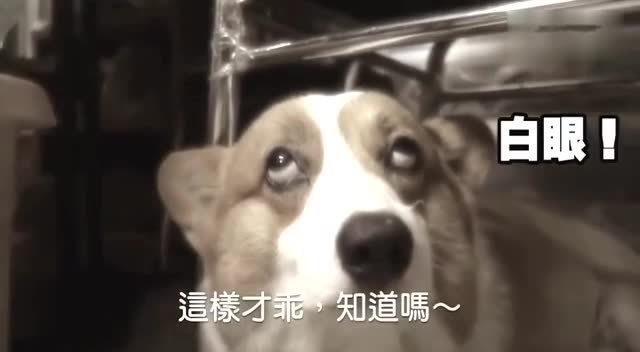 狗狗想睡觉 被主人吵到翻白眼!