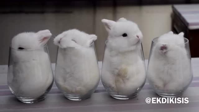 4只呆萌的小兔子被装进杯子后